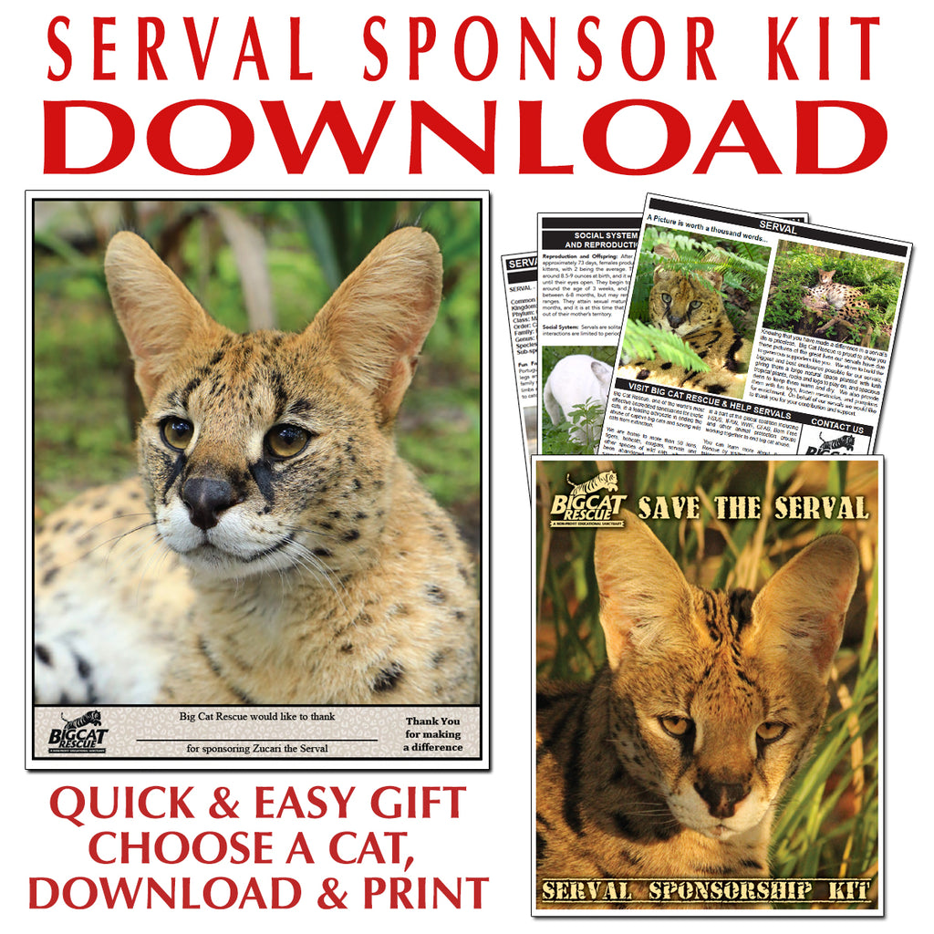 Download - Serval Sponsorship