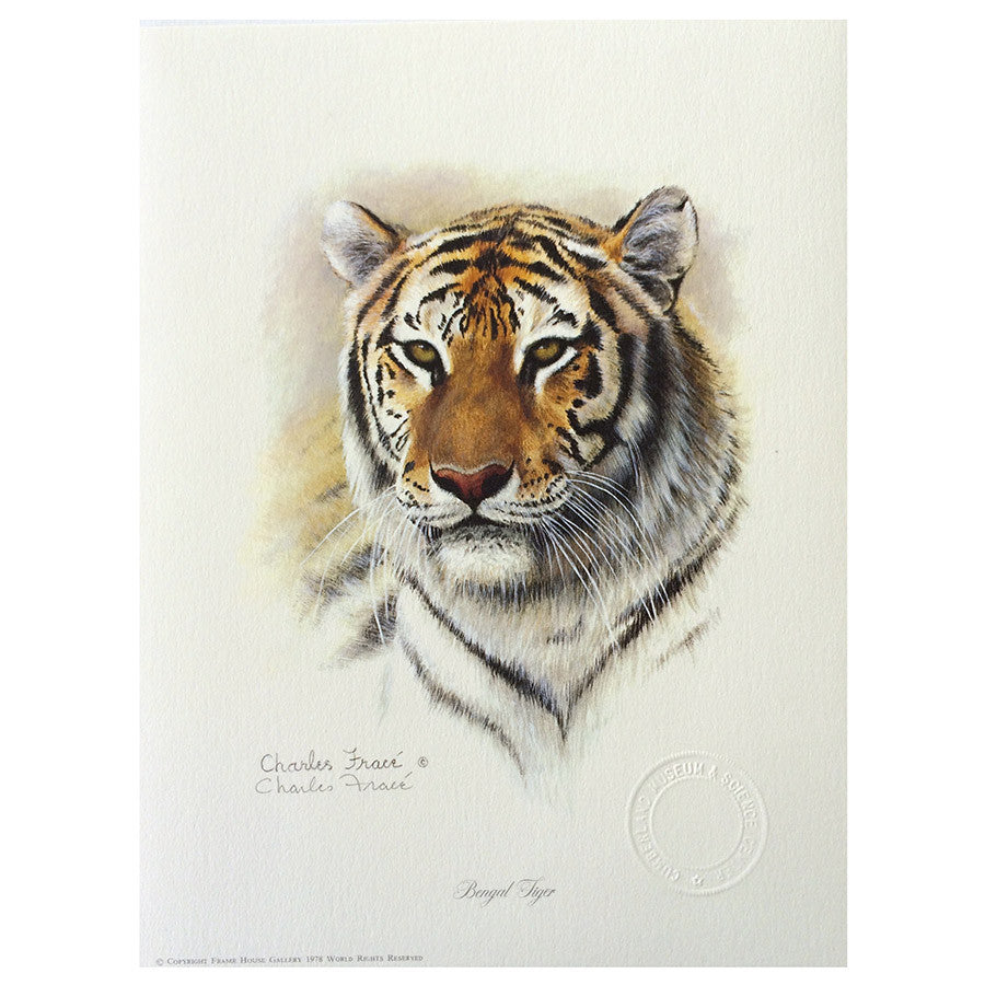 Print - Tiger by Charles Frace'