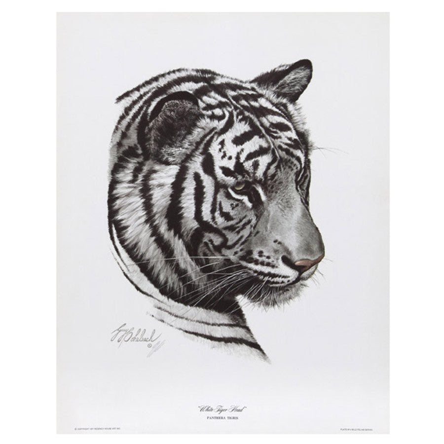 Print - White Tiger by Guy Coheleach