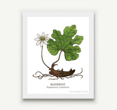Botanical Prints - 8 x 10 - 17 Designs to Choose From!
