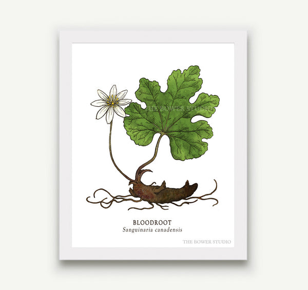Botanical Prints - 5 x 7 - 15 Designs to Choose From!