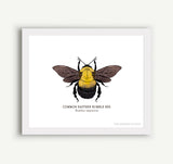 Bee Project Prints - 5 x 7 - 100% of Profits to Save the Bees