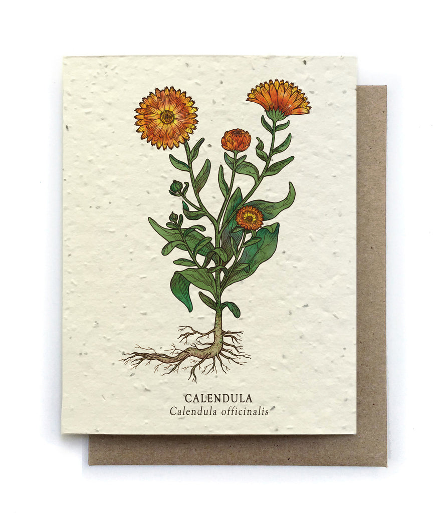 Botanical Greeting Cards Plantable Seed Paper 15 Designs To