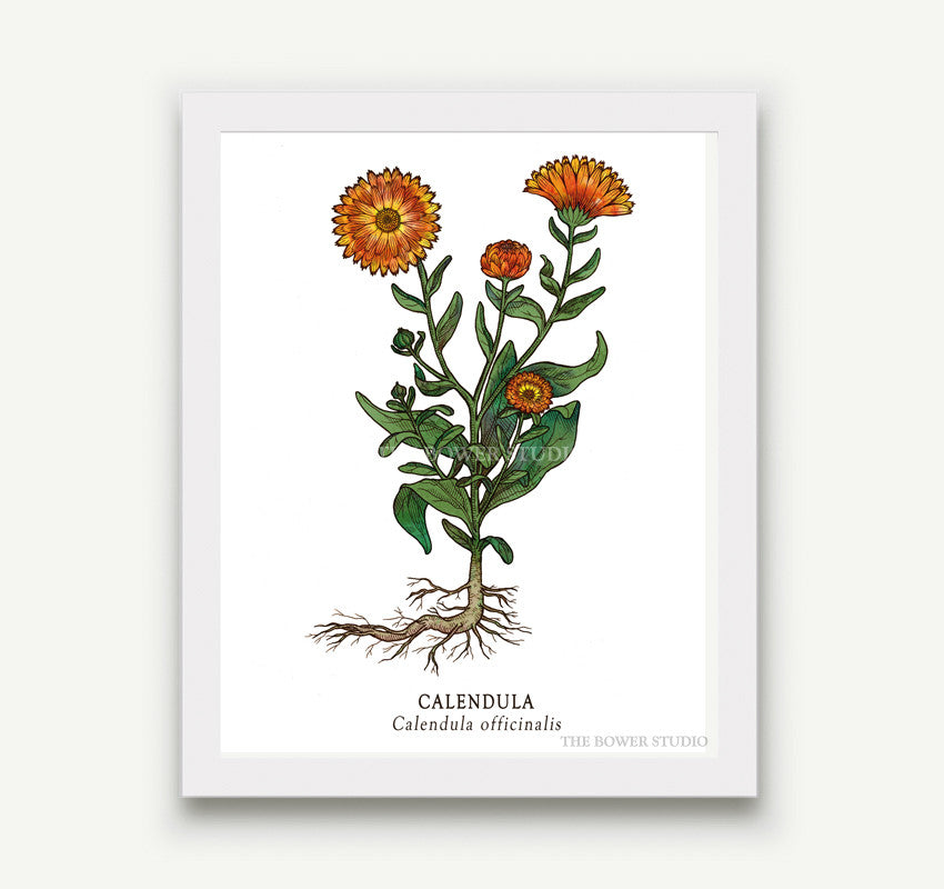 botanical prints 5 x 7 15 designs to choose from