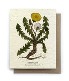 Botanical Greeting Cards - Plantable Seed Paper - 15 Designs to Choose From!