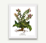 Botanical Prints - 5 x 7 - 17 Designs to Choose From!