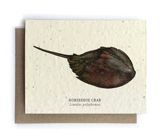 Ocean Greeting Cards - Plantable Seed Paper - 2 Designs to Choose From!