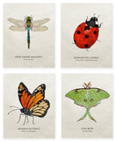 Organic Cotton Patches - Insects - 4 Designs to Choose From!