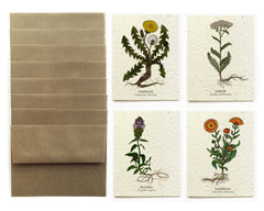 Medicinal Plants Greeting Cards - Set of 8 - Plantable Seed Paper