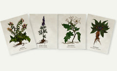 Organic Cotton Patches - Poisoner's Herbs - 4 Designs to Choose From!