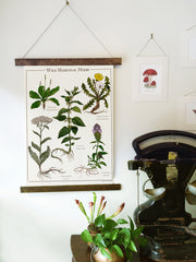 Wild Medicinal Herbs Canvas Wall Hanging