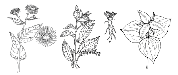 Medicinal Plants Of The Northeast Coloring Books Vol 1 And 2