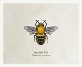 Organic Cotton Patches - Bees - 4 Designs to Choose From!