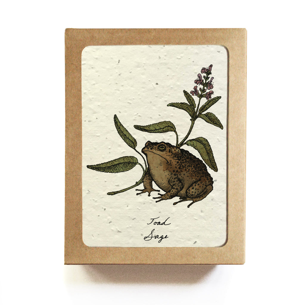Witchs herb code greeting cards set of 8 plantable seed paper witchs herb code greeting cards set of 8 plantable seed paper m4hsunfo