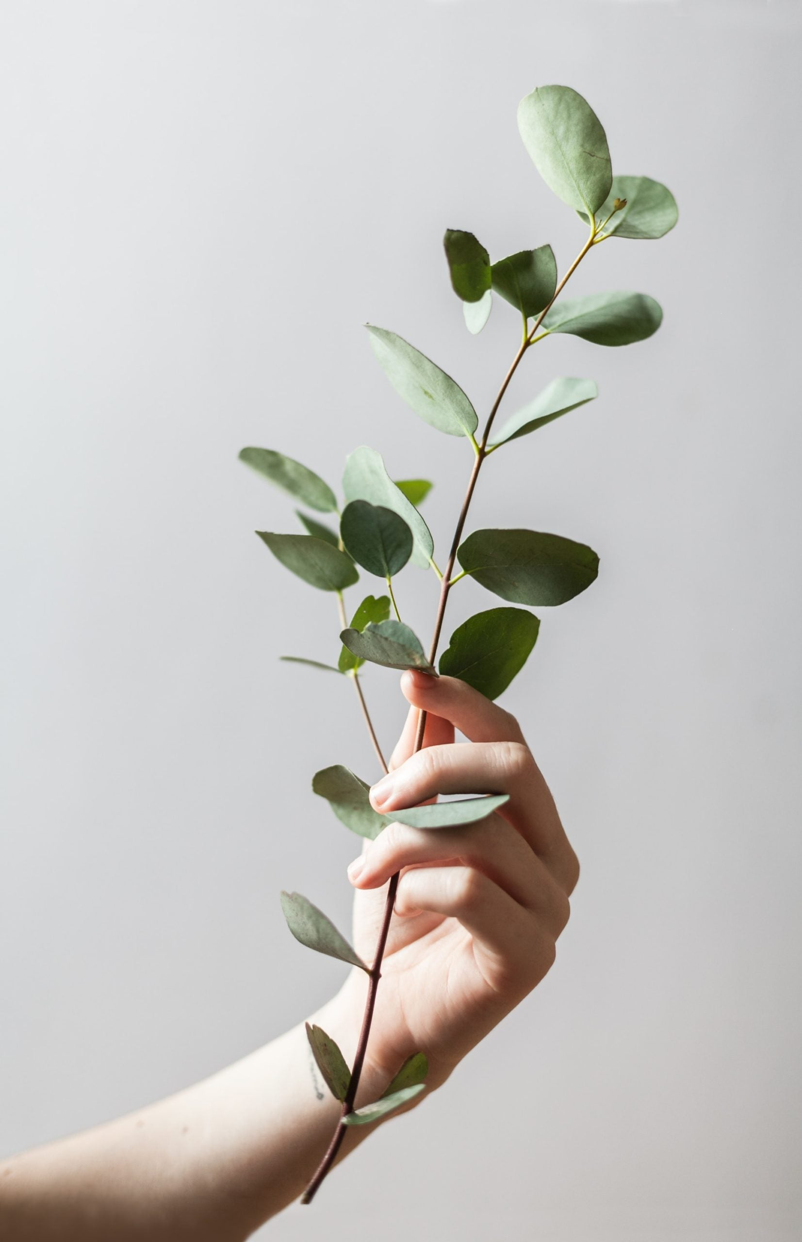 hand holding up plant