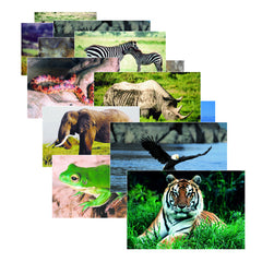 WILD ANIMAL POSTER SET SET OF 10