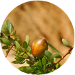 12 Amazing Benefits of Argan Oil
