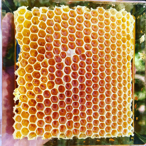 Raw Southern California Comb Honey