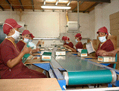 Several of Cape De Hoop's workers, dressed in red outfits and masks, package up the fermented and dried tea plant and get it ready to export from inside the plantation facilities.