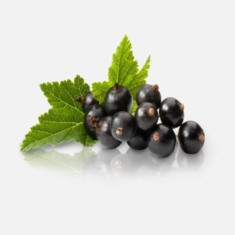 Blackcurrant Flavour E liquid 100ml box 10x10ml £19.99