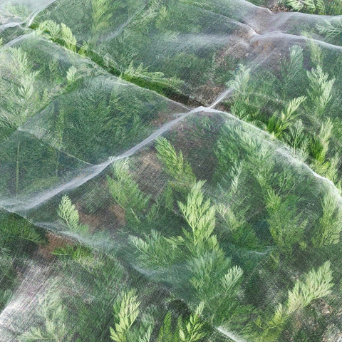 Medium Insect Netting