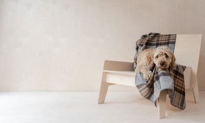 New Arrival Pet Blankets: Wag Worthy Wool