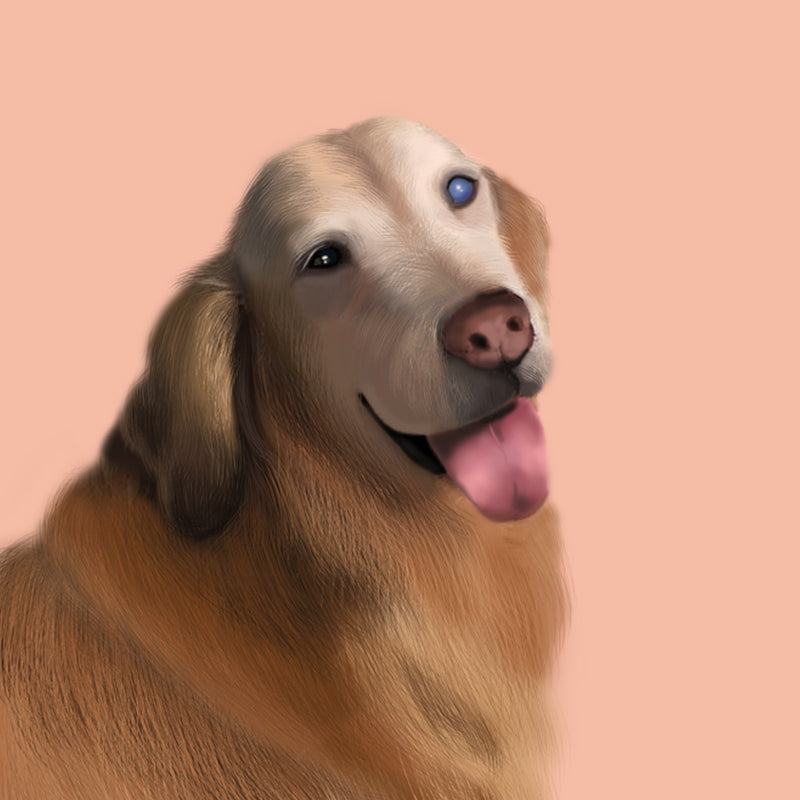 Realistic Pet Portrait • 1 Pet