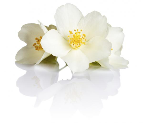 Flower Power - Do you love Rose, Vanilla or Jasmin