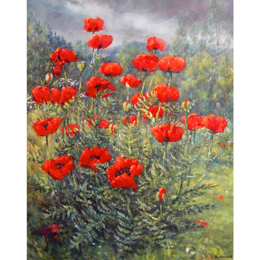 Glenmuick Poppies
