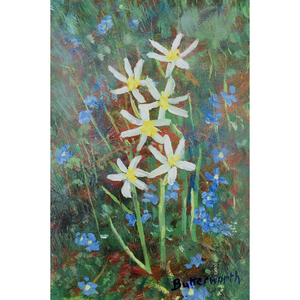 Star of Bethlehem and Speedwell