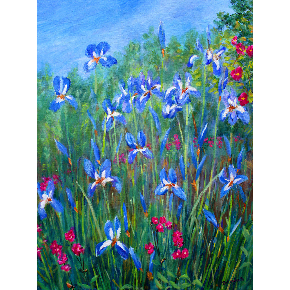 Blue Irises - Red Campion