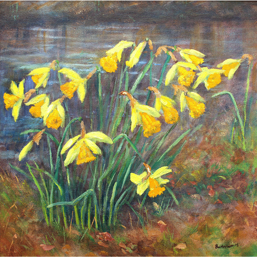 Daffodils by Drummie Pond