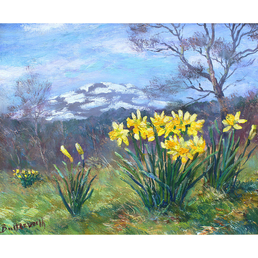 Morven and Daffodils