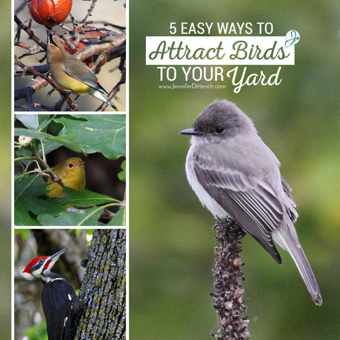 Attract Birds to Your Yard