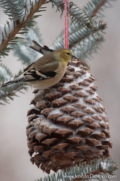 Feed the birds with these Pinecone Birdseed Ornaments by Jennifer Ditterich Designs