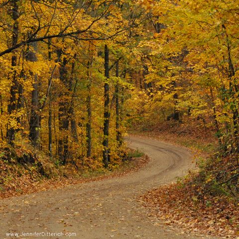Country Road in Autumn by Jennifer Ditterich