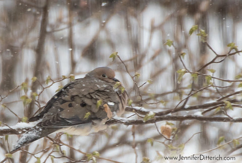 7 Easy Ways to Help Your Backyard Birds through Bad Weather by Jennifer Ditterich Designs  A pair of Purple Finches enjoy the seeds from a feeder.