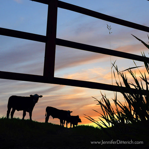 Cattle Sunset Silhouette by Jennifer Ditterich Designs