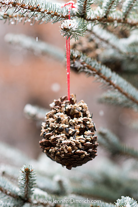 DIY Christmas treats for the birds by Jennifer Ditterich Designs