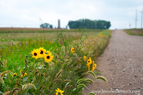 Dirt Road to Farm Photograph by Jennifer Ditterich Designs