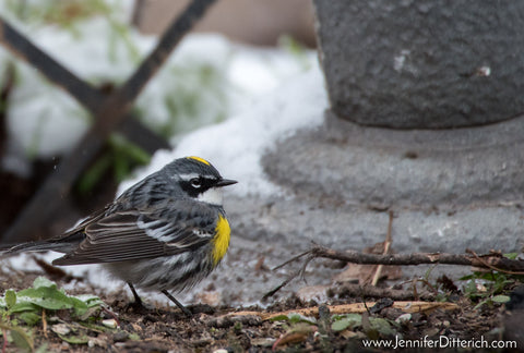 7 Easy Ways to Help Your Backyard Birds through Bad Weather by Jennifer Ditterich Designs