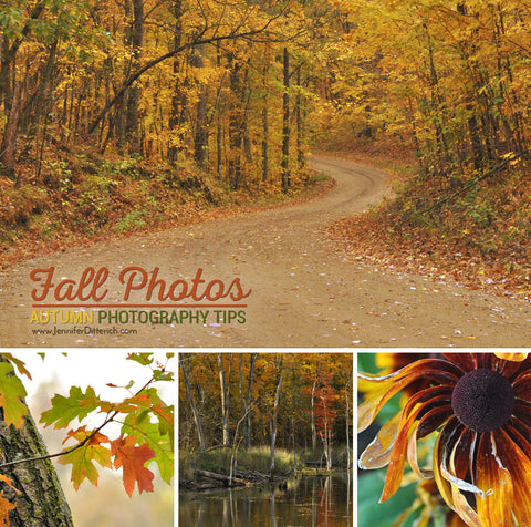 Fall Photography Tips by Jennifer Ditterich Designs