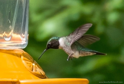5 Easy Ways to Attract Hummingbirds to Your Yard by Jennifer Ditterich