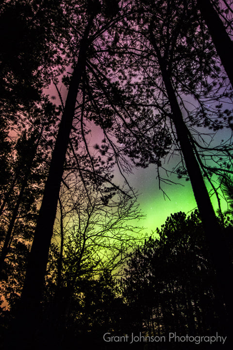 Northern Lights Through Trees by Grant Johnson Photography