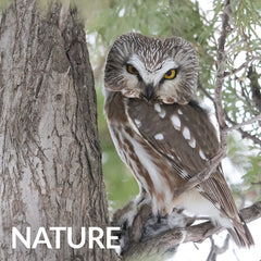 nature and bird topics