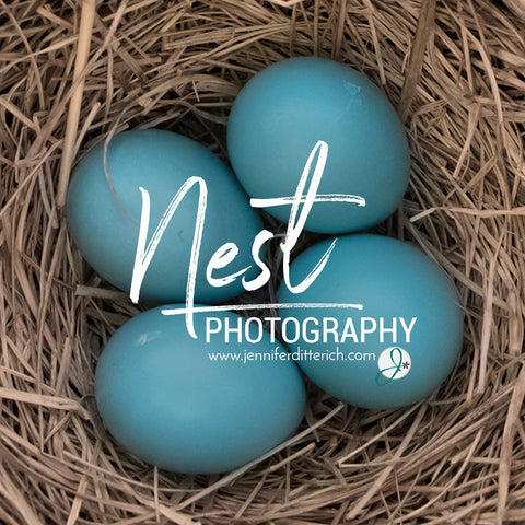 nest photography