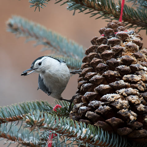 Nuthatch on Pincone Birdfeeder Ornament by Jennifer Ditterich Designs