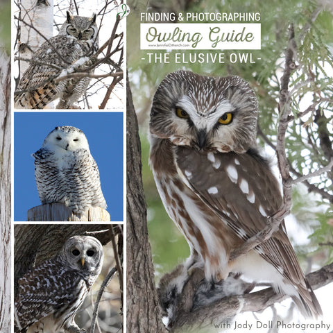 Owling Guide - Finding and Photographing Owls