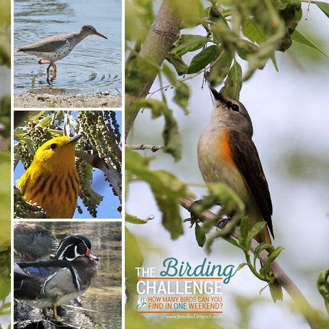 The Birding Challenge by Jennifer Ditterich Designs