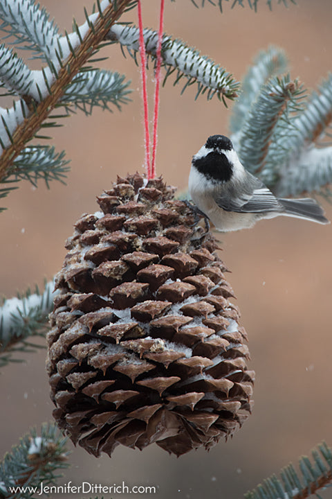 Winter Chickadee on Pinecone Ornament by Jennifer Ditterich Designs